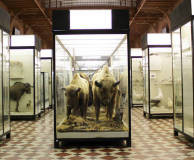 Zoological Museum of the Moscow University
