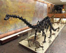 Mesozoic Era. Photo: Museum of Paleontology