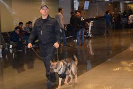 The canine unit in Vnukovo airport